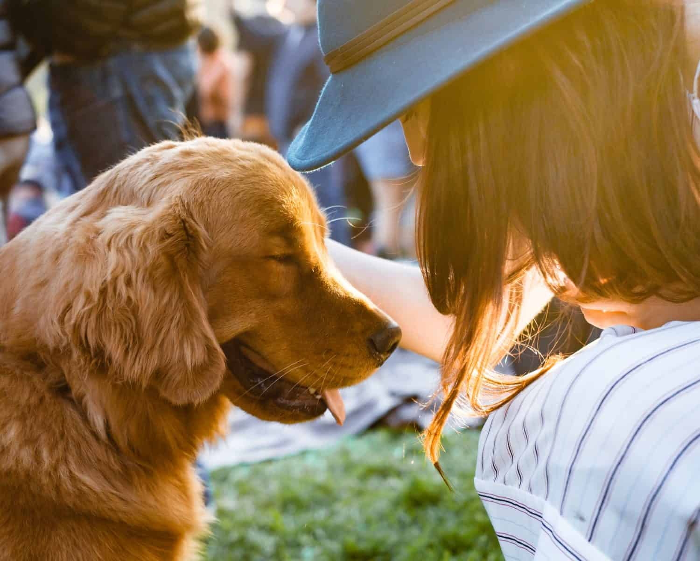 Jack's Dog